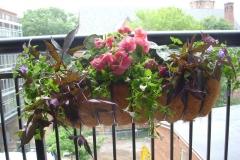 CONDO PLANTING WINDOW BOXES