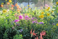 Landscape_cut_flowers_July_and_August_2011_134