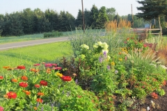 Landscape_gardens_July_and_August_2011_119