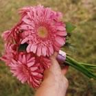 pink_b3