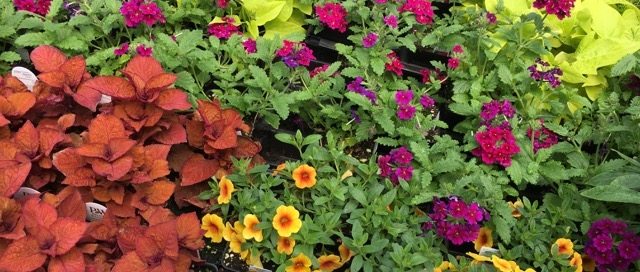 brightly colored flowers and plants