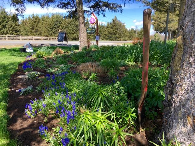 Shade garden plant options