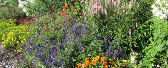 Sunny garden with assorted flowers